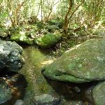 Pleasent section of Lyrebird Gully creek (377903)