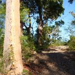 Trail leading over a rise south of Patonga Creek (379091)