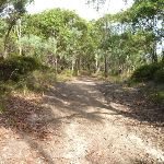 Eucalypt forest Green Point Reserve (389588)
