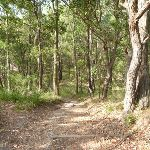 Track through forest in Green Point Reserve (389600)