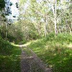 Trails through the eucalypt forest (389663)