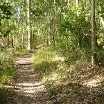 Eucalypt forest Green Point Reserve (389738)