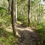 Track near Lake Macquarie in Green Point Reserve (389888)