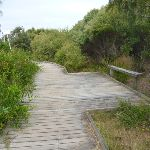 Timber boardwalk and seat on the Owens Walkway (391160)