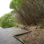 Timber boardwalk and seat on the Owens Walkway in Redhead (391259)