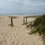 Timber posts with the Redhead Beach in the background (391340)