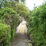 Manly Scenic Walkway (39180)