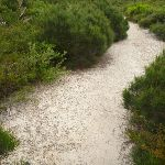 Sandy track in the Awabakal Nature Reserve (392069)