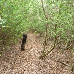 Leafy track near Collier St in Redhead in the Awabakal Nature Reserve (392282)