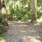 Leafy trail on Blueberry Ash trail in the Blackbutt Reserve (400060)