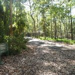 Trail and metal ring fence in Blackbutt Reserve (400078)