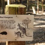 'Red Kangaroo' sign at Carnley Ave Reserve (400183)