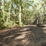 Trail and metal ring fence near Carnley Ave Reserve in Blackbutt Reserve (400198)
