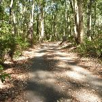Trail through well established fores in Blackbutt Reserve (400252)