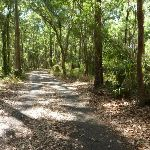 Forest on a sunny day in Blackbutt Reserve (400261)