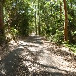 Trail with shadows on the Main Ridge Walk in Blackbutt Reserve (400363)