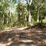 Wide trail through forest in Blackbutt Reserve (400495)