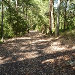 Trail through forest in Blackbutt Reserve near Lookout Road (400546)