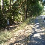 Trail into Blackbutt Reserve and near Lookout Road (400558)
