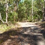 Forested track near the Lily Pond Picnic Area in Blackbutt Reserve (400990)