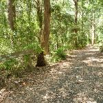 Forested trail near Lily Pond Picnic Area in Blackbutt Reserve (401050)