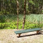 Seating bench at Lily Pond Picnic Area in Blackbutt Reserve (401140)