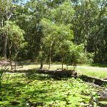 Lily Pond Picnic Area in the middle of Blackbutt Reserve (401161)