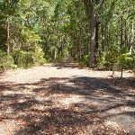 Trail through fores in Blackbutt Reserve (401332)
