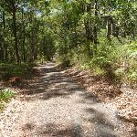 Forested trail near Lookout Road in Blackbutt Reserve (401371)
