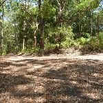 Trail intersection and sign in Blackbutt Reserve (401392)