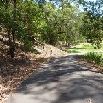 Trail in Richley Reserve near the large ponds in Blackbutt Reserve (401659)