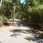 Wide trail at Richley Reserve in Blackbutt Reserve (401689)