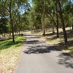Trail through open trees at Richley Reserve (401692)