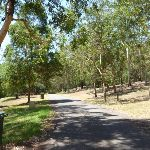 Trail amongst trees and grassland at Richley Reserve in Blackbutt Reserve (401695)