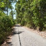 Trail with overhead powerlines in Blackbutt Reserve (401785)