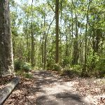 Tall trees beside a trail in the Blackbutt Reserve (401911)