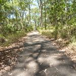 Sealed trail in the Blackbutt Reserve (401923)