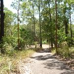 Trail to a clearing in Blackbutt Reserve (401935)