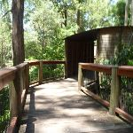 Elevated boardwalk on the Wildlife Exhibits at Carnley Ave Reserve (402079)