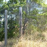 Posts in bushland Green Point Reserve (402382)