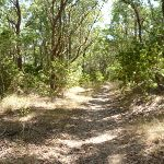 Eucalypt forest Green Point Reserve (402529)