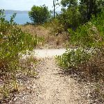 Track junction near the Sea Eagle Lookout in Green Point Reserve (402595)