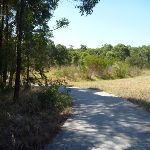 Both forest and grasslands in Green Point Reserve (402943)