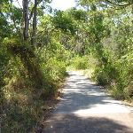 Foot path through eucalyptus forest in Green Point Reserve (402967)