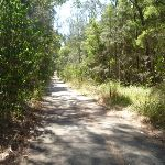 Eucalypt forests in Green Point Reserve (403021)