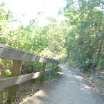 Timber fencing next to trail in Green Point Reserve (403270)
