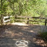 Timber fencing on Zig Zag trail in Green Point Reserve (403276)