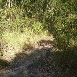 Faint track into forest near the foreshore of Lake Macquarie (403780)