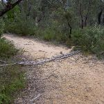 Govetts Ck Trail covered by log (40863)