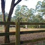 Horse Paddock at the old Megalong Village site (411707)